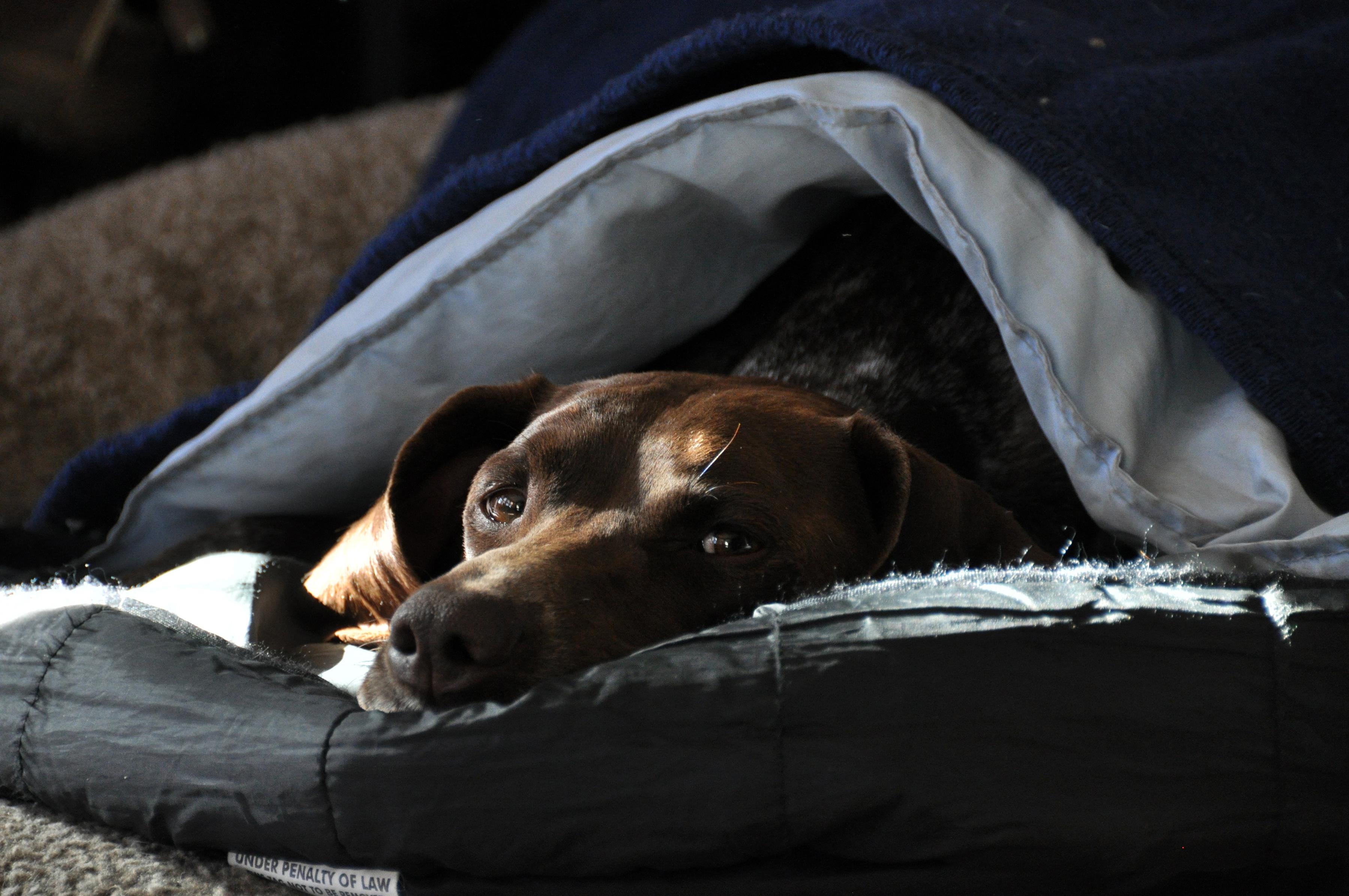 Dog Sleeps Under Her Bed