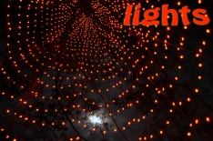 (1) Lights: Longwood Gardens