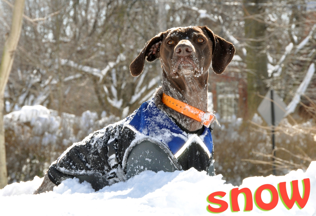 (7) Snow: Queen of the snow drifts! (2010)