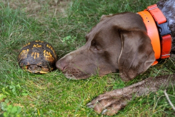 "Bailey and her turtle: ""delicate"""