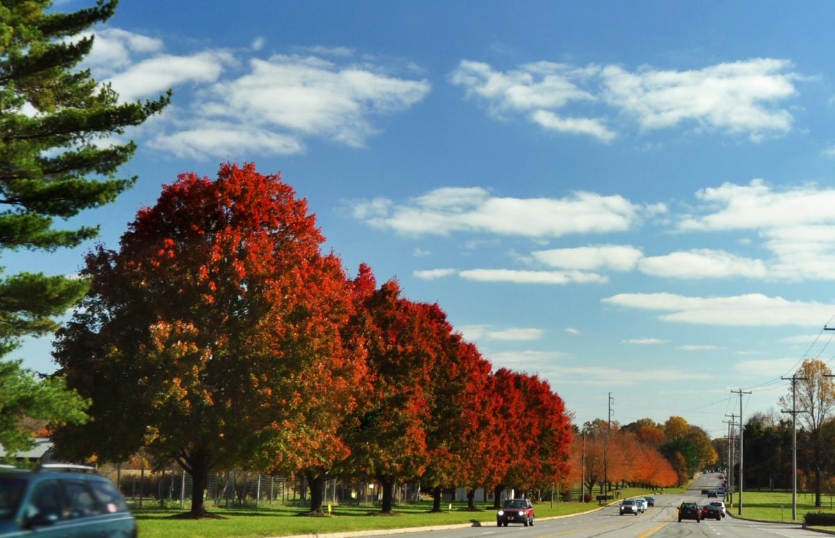 Changing Seasons: Fall Trees
