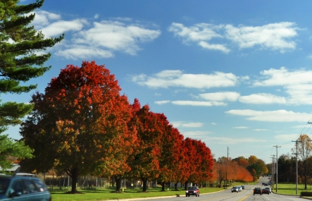 Changing Seasons: Fall Trees