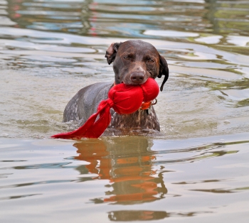 Bailey with her Red Wubba (June 2011)