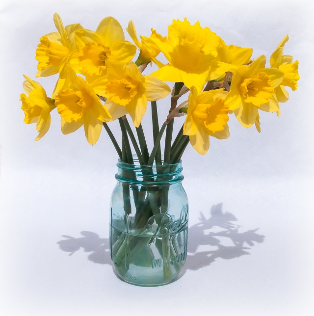 Daffodils in Blue Mason Jar 2