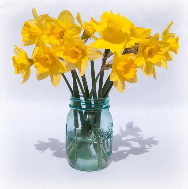 Daffodils in Blue Mason Jar 2