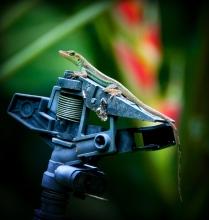 A botanical garden gecko!