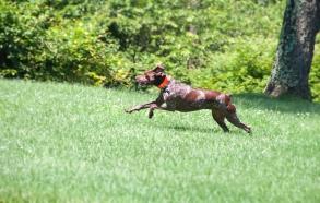 Bailey on patrol!