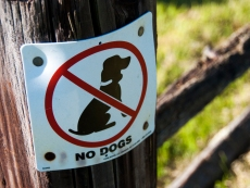 Sorry Bailey, no dogs allowed!