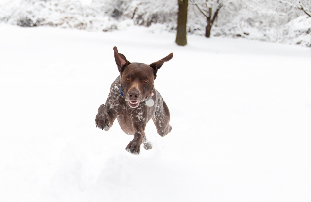 Dashing through the snow!
