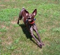 Wild eared pup