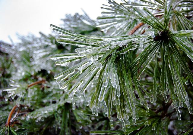 Icy Needles