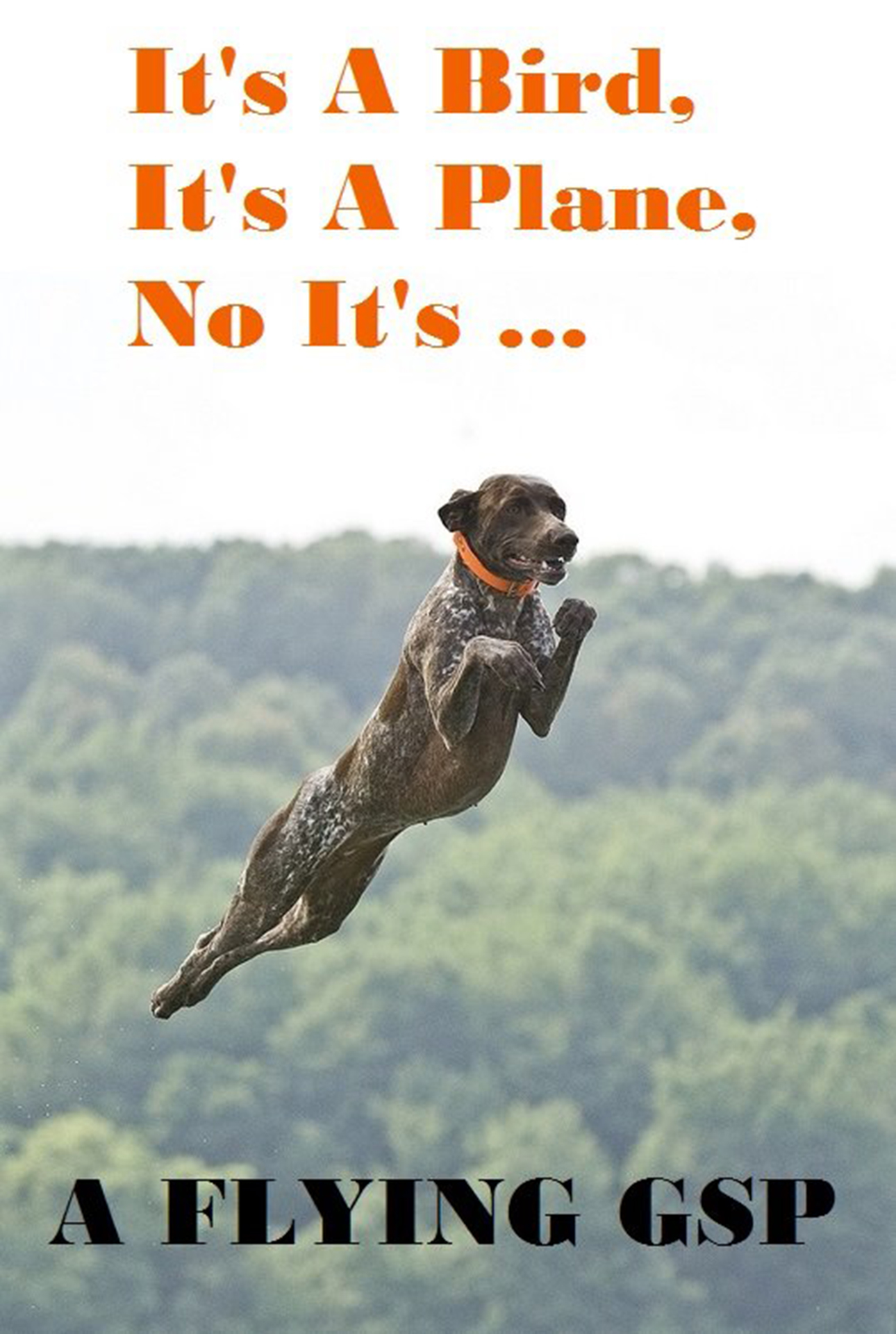 bailey meme flying dog the little gsp