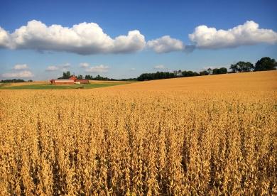 Willistown Township Farm