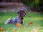 Piper the GSP
