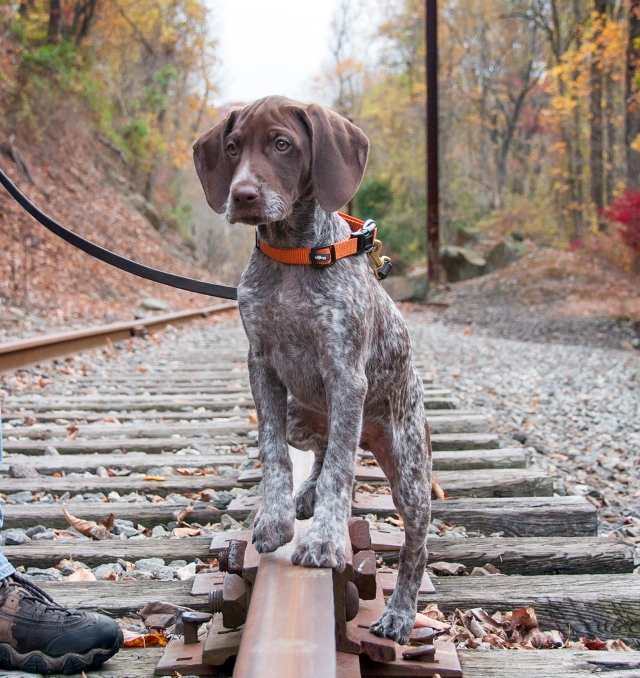 Piper on the train tracks 1