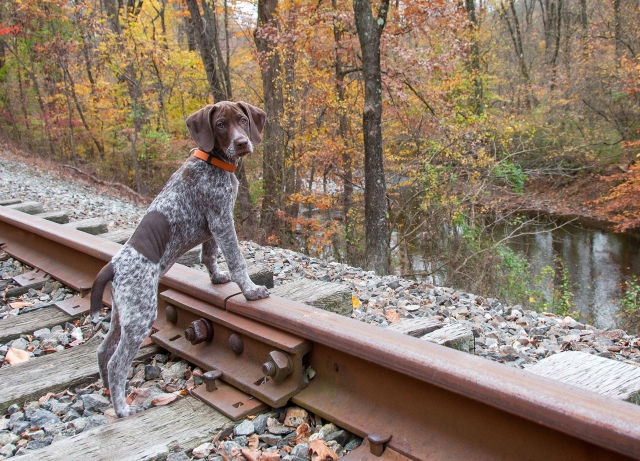 Piper on the train tracks 3