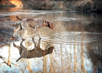Piper and her reflection in Ridley Creek