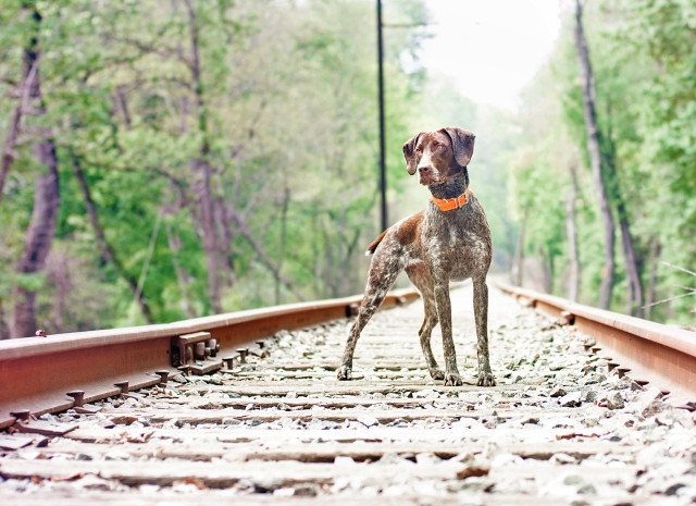 Piper on the tracks- 5-9-15