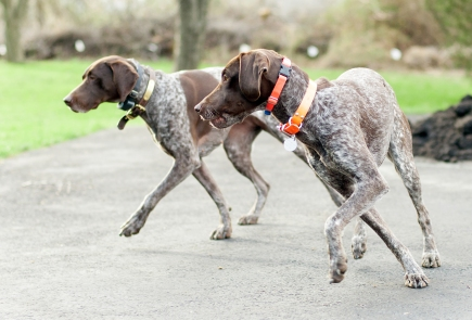 In Sync Shorthairs