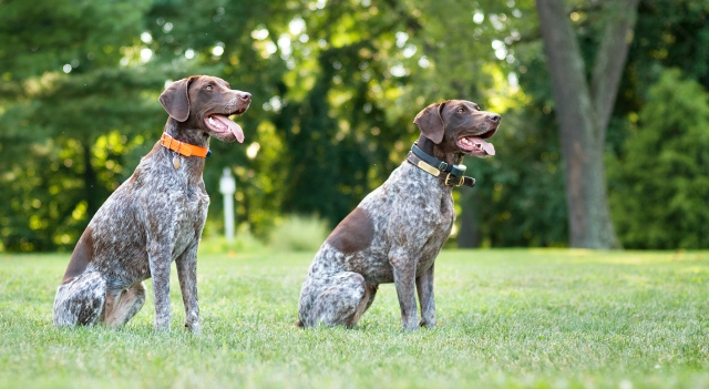 Pair of Pointers
