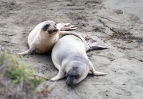 Seal friends