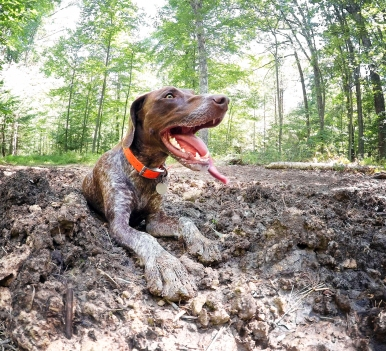 Best way to cool off in a hurry? Organic mud bath!