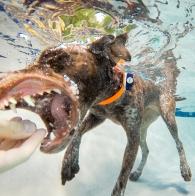 Getting the hang of those underwater retrieves