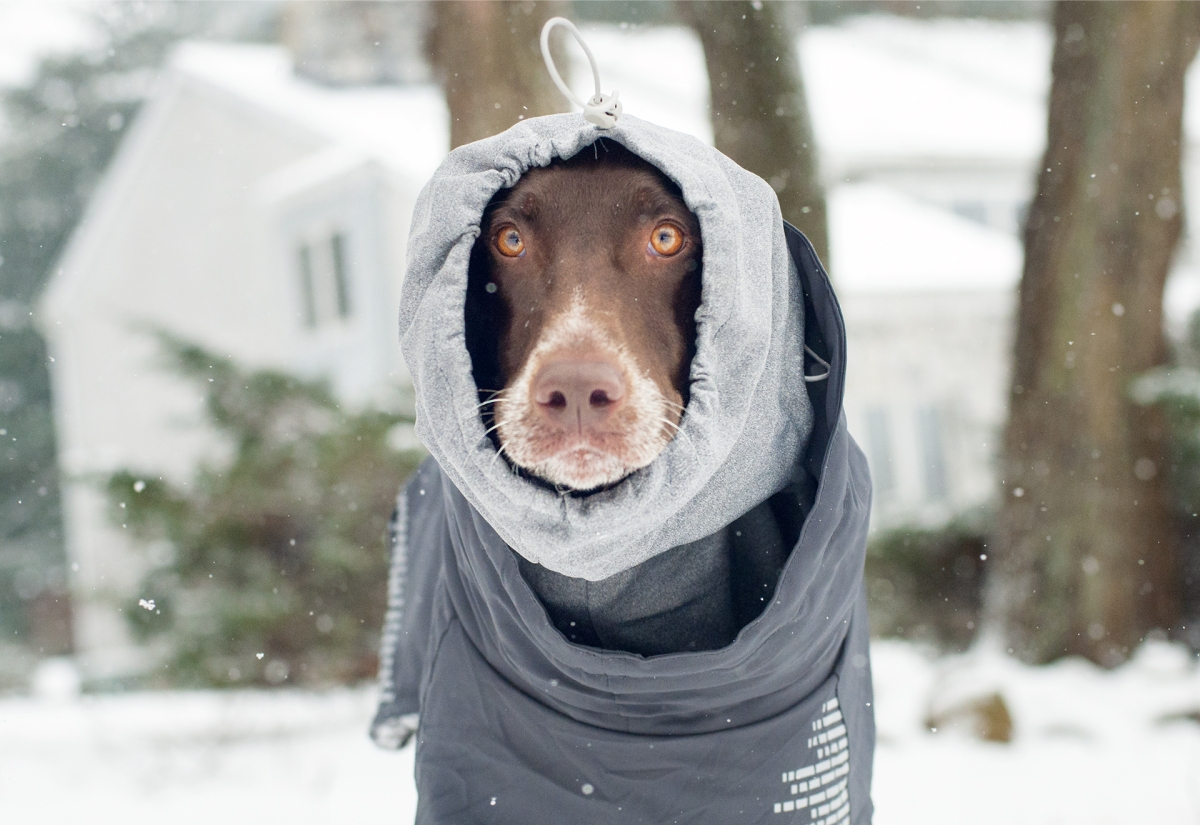 Review: Hurtta Extreme Warmer Dog Jacket