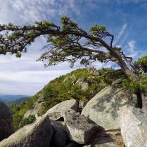 Matt's tree