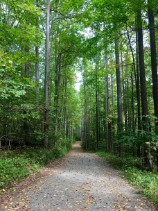 Weakley Hollow Fire Road