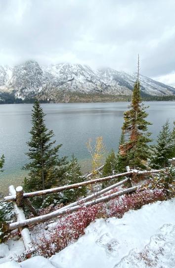 Jenny Lake vert